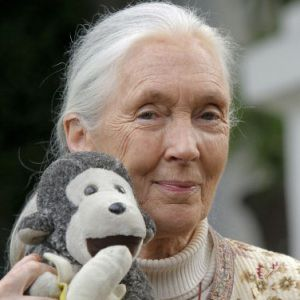 Jane Goodall Biography, Age, Height, Weight, Family, Wiki & More